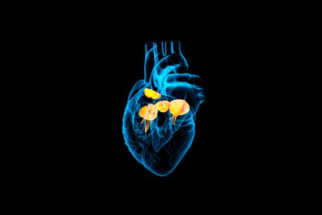 Fetal-heart-LSUS