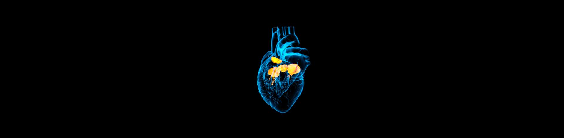 FETAL HEART:  No More Fear Recording